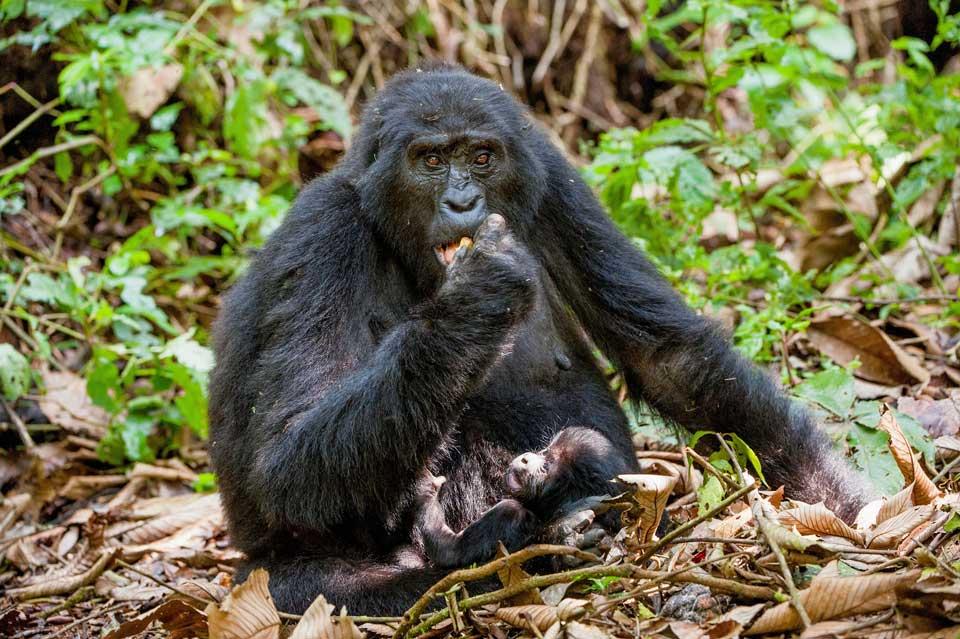 Reise nach Uganda Kibale