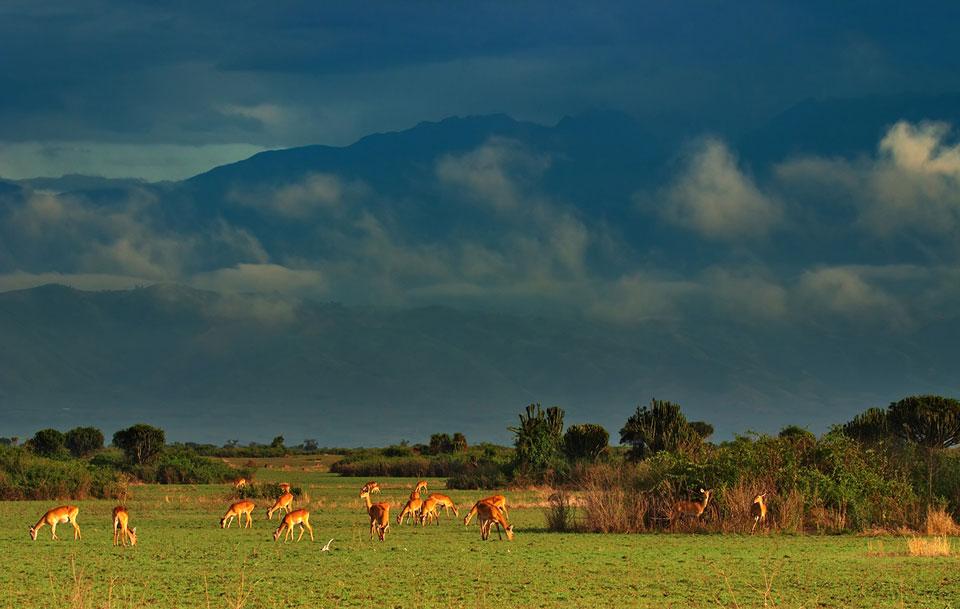 Reise nach Uganda Queen-Elisabeth-Nationalpark