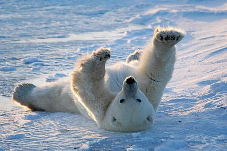 Arktis Urlaub Kanada