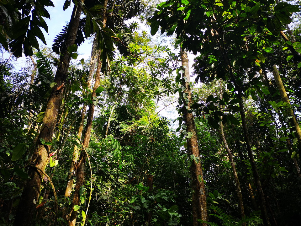 Regenwald Urlaub